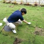 草抜きをしております。